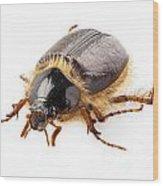 Cockchafer Or June Beetle  Wood Print