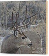 4x4 Mule Deer Buck Wood Print