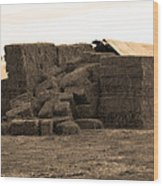 A Needle In A Haystack Wood Print