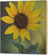 A Sunflower  Wood Print