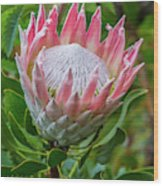 Africa, South Africa, Cape Town Wood Print