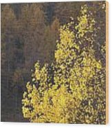 Alberi Wood Print by Niki Mastromonaco
