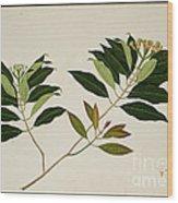 Album Of Drawings Of Plants Wood Print