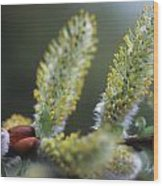 Alpine Wildflowers Wood Print