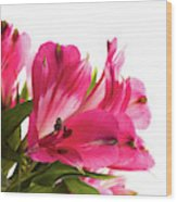 Alstroemeria Flowers Against White Wood Print