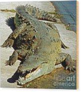 American Crocodile Wood Print