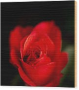 Amore Mio Wood Print