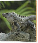 An Iguana Sunbathes In The Ancient Wood Print