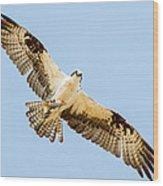 An Osprey Feeding On A Trout Wood Print