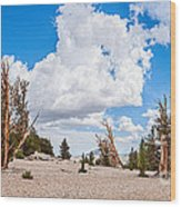 Ancient Panorama - Bristlecone Pine Forest Wood Print