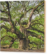 Angel Oak Tree Of Life Wood Print