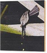 Anhinga Or Snake Bird Wood Print