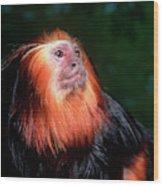 Animals Wood Print