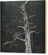 Anthropomorphic Tree Wood Print