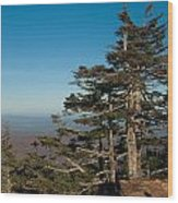 Appalachian Mountains From Mount Mitchell  Wood Print