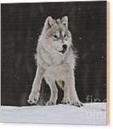 Arctic Wolf Wood Print