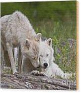 Arctic Wolves Wood Print