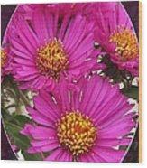Aster Named September Ruby Wood Print