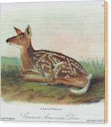 Audubon Deer Wood Print