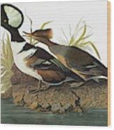 Audubon Merganser Wood Print