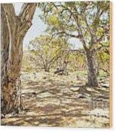 Australian Outback Oasis Wood Print