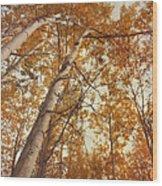 Autumn Aspens Wood Print by Priska Wettstein