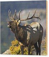 Autumn Bull Elk Bugling Wood Print