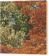 autumn colours in Bavaria Wood Print