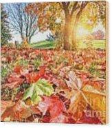 Autumn Fall Landscape In Park Wood Print