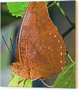 Autumn Leaf Butterfly Wood Print