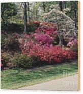 Azaleas And Dogwood Wood Print
