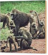 Baboons In African Bush Wood Print