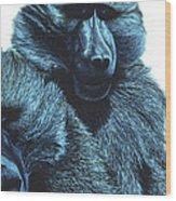 Baboons  Wood Print