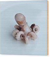 Baby Octopus - Moscardini Wood Print