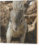 Baby Rock Squirrel Wood Print