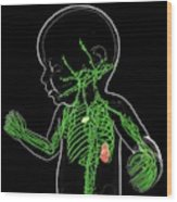 Baby's Lymphatic System Wood Print