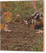 Badger  Taxidea Taxus Wood Print
