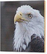 Bald-eagle-profile Wood Print