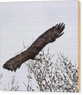 Bald Eagle Soaring Wood Print