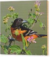 Baltimore Oriole (icterus Galbula Wood Print
