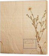 Beautiful Dried Vintage Flowers Wood Print