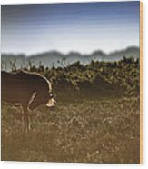 Beautiful Image Of New Forest Pony Horse Backlit By Rising Sun I Wood Print