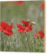 Beautiful Poppies 1 Wood Print