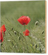 Beautiful Poppies 4 Wood Print