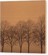 Beautiful Trees In The Fall Wood Print