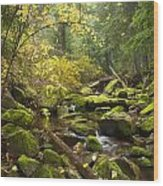 Beauty Creek Wood Print