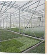 Bedding Plant Production Wood Print
