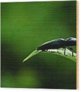 Beetle At Sunrise Wood Print