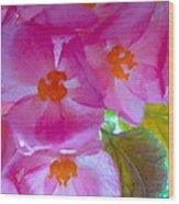 Begonia Debut Wood Print