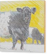 Belted Galloway Cows Wood Print